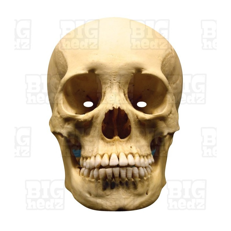 human skull life size card face mask halloween scary skeleton - Halloween Skeleton Head