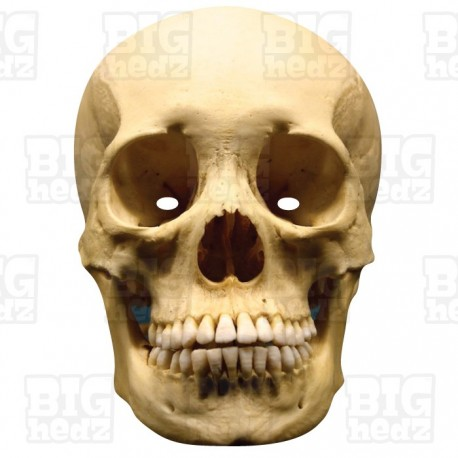 HUMAN SKULL : Life-size Card Face Mask Halloween Scary Skeleton